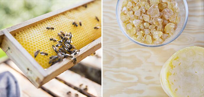 Rosemarie Juergens Little Bee Fresh Bienenkasten